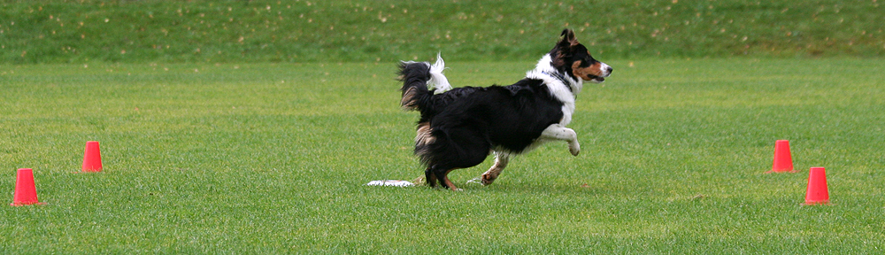 Torsby Brukshundklubb
